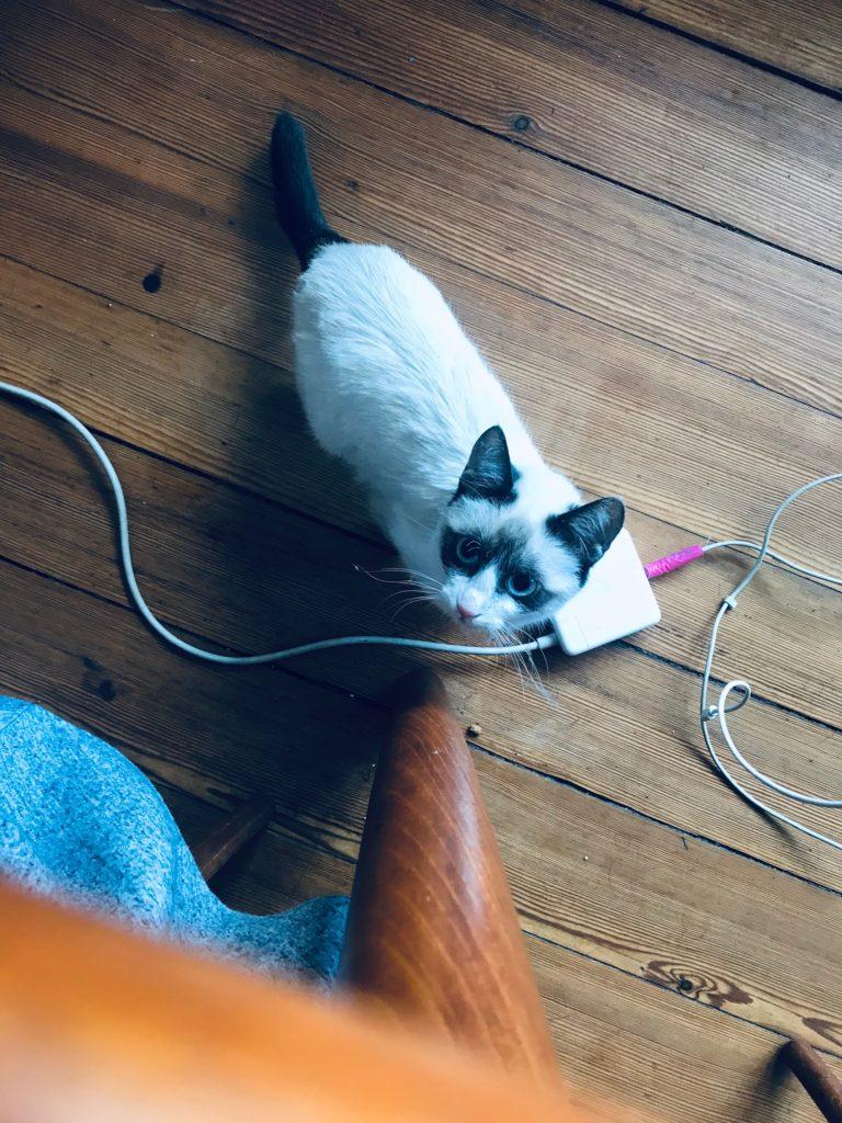 Katze Ela(a)adebarstoechter.de